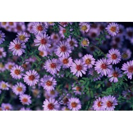 EXPERT - A4 - witte, matte, 18UP plantenetiketten uit polyesterfilm 260g/m2 - 195micron - 100 vel